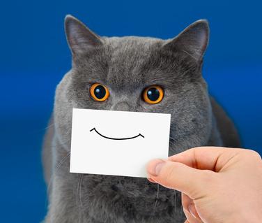 Graue Katze mit aufgemaltem Smiley